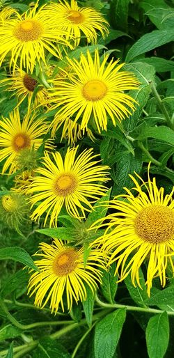 Walking Around Garden Flowers Flowers Collection  Flowers Flower Head Flower Yellow Leaf Close-up Plant Green Color In Bloom Blooming Yellow Color Plant Life