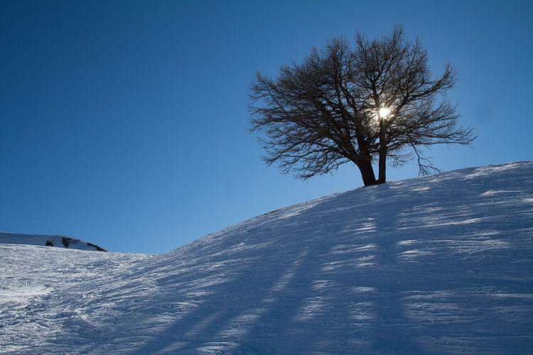 AlpesFrancaises Ciel Bleu ☀ Hiver Montagne Nature Photography Neige❄ Arbre Bare Tree Beauty In Nature Contre Jours, Silouhette Paysage Risoul Soleil☀️