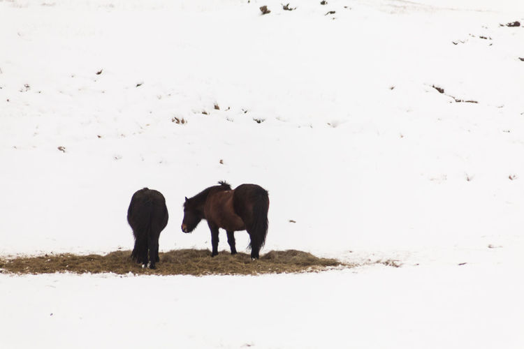 View of horses on snow covered land