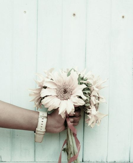 Cropped Hand Of Person Holding Flowers Against Wooden Wall
