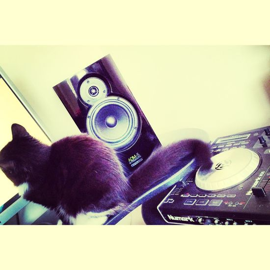 Hendrix spinning some tunes and writing an essay...talent Kitten Decks Speakers Music