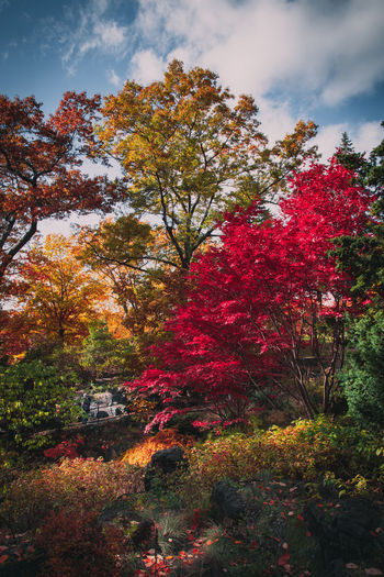Spring in Toronto Spring Foliage Forest Plant Organic Alive  Photography EyeEm Best Shots EyeEmNewHere EyeEm Nature Lover EyeEm Gallery Nikon D7500 Colorful Sunny Day Season  Nature Outdoors Park Toronto Ontario Canada depth of field Focus On Foreground Focus Tripod Mood Sky Perfect New Fresh