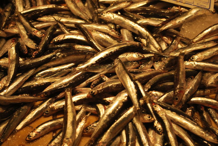 Abundance Animal Themes Backgrounds Barcelona Barcelona, Spain Catalonia Catalunya Close-up Day Dried Fish  Fish Fish Market Food Food And Drink For Sale Freshness Full Frame Healthy Eating Indoors  Large Group Of Animals Large Group Of Objects Market No People Retail  Seafood