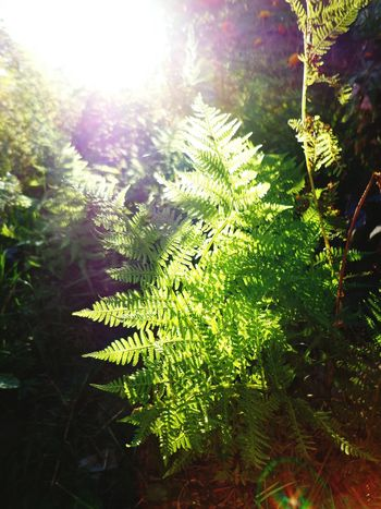 Fern Green Sunny Glitch Catch The Moment Misterious Nature Photography EyeEm Nature Lover Plants Nature