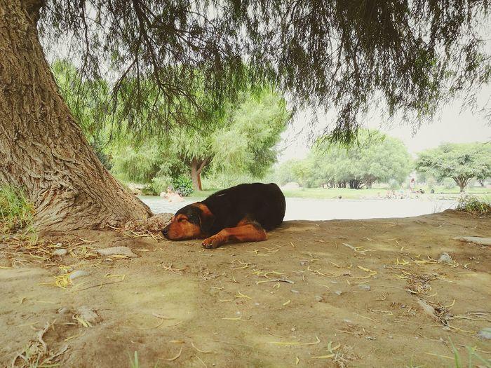 Dog lying on a land