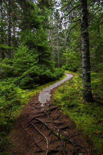 Granite pathway curving up the hill through the woods Path Vertical Composition Beauty In Nature Day Forest Nature No People Outdoors Pathway Pathway In The Forest Pine Tree Scenics Tree Vertical WoodLand Woodland Path Woodland Walk Woodlands Woods