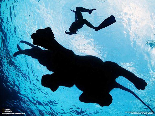 Phil dive into the water..!! Balti Hicham.