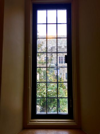 Window Indoors  Day Nature No People Tree Lookingout