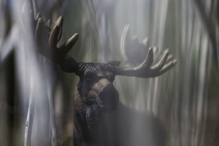 SCHLEICH Werbung - 100MM, f/3.5, 1/1250sec, ISO100 - Figurephotography Figuarts Figurarts Figurecollection Edit With Snapseed Snapseed Schleich Tiere Schleich Animals Schleich Elk