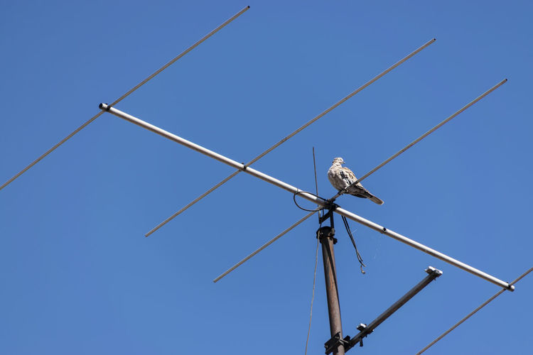 Low angle view of bird on antenna