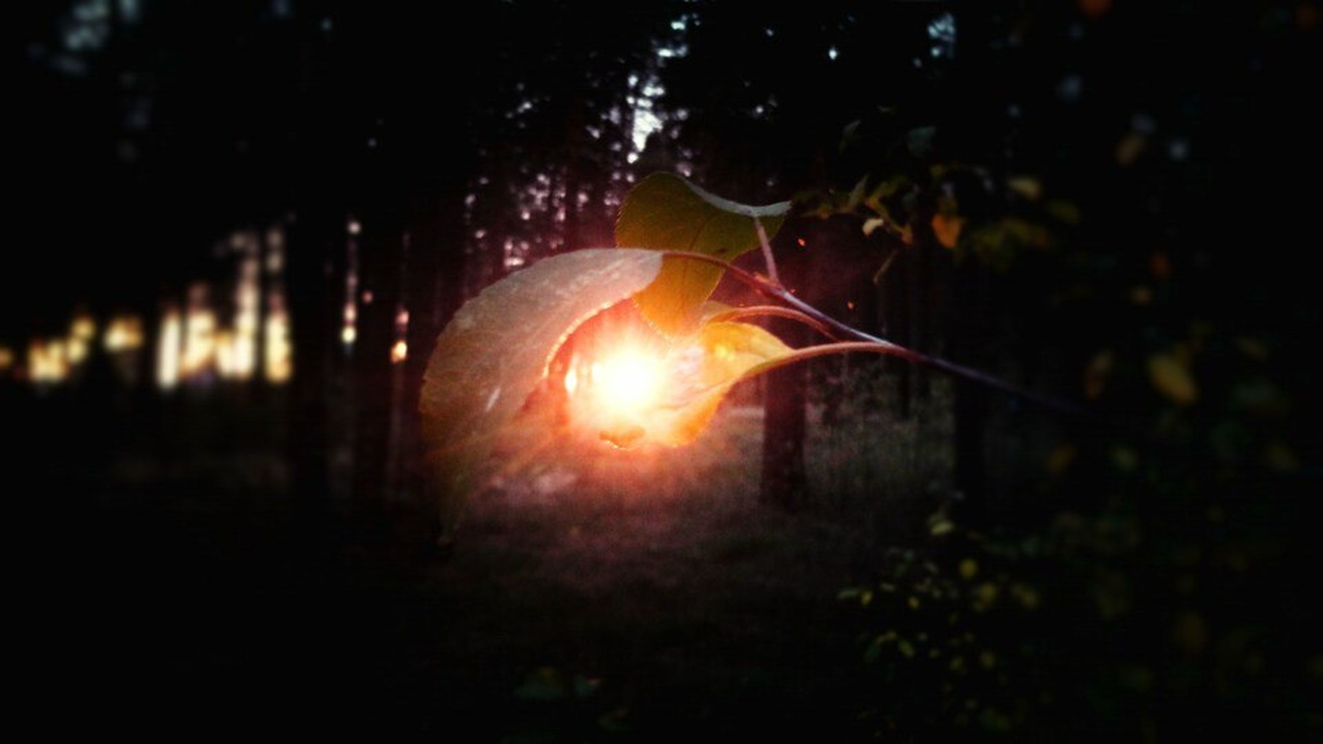 sunset, orange color, sun, glowing, lens flare, night, sunlight, close-up, sunbeam, focus on foreground, nature, outdoors, tree, beauty in nature, no people, burning, silhouette, illuminated, back lit, plant