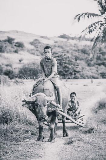 Friends riding buffalo on field