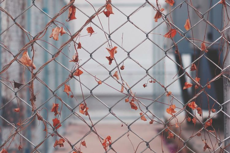 Full frame shot of chainlink fence outdoors