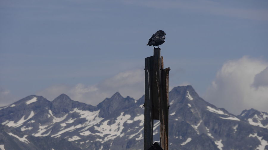 Bird perching on wooden post against snowcapped mountains