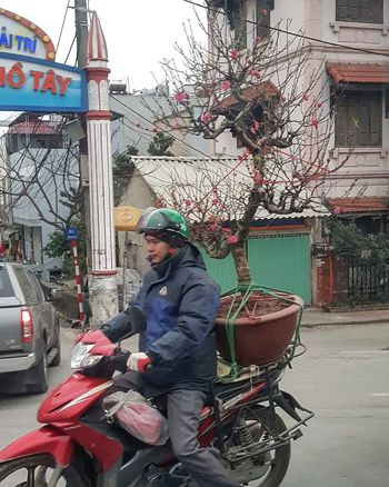 I believe this plum tree cost more than a month's salary for this man Plum Tree On Bike Man On Bike Vietnamese New Year New Year Blossoms Vietnamese Culture Streetphotography Hanoi Streetphotography Hanoi Vietnam  City