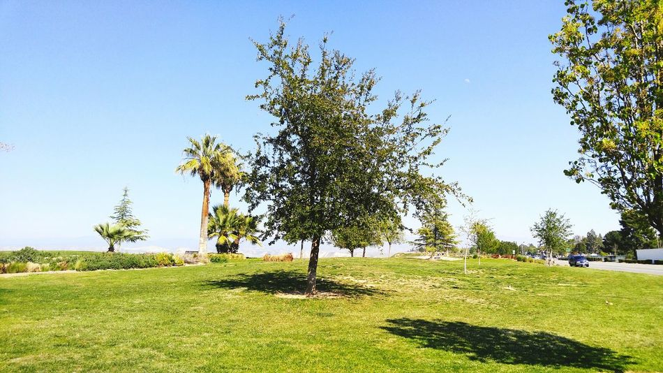Thebluffs Trees Tree_collection  Trees And Sky Treescape Tree Photography Treeworld BakersfieldCA Kerncounty Nature Nature_collection Nature Photography Naturelovers Beautiful Day Beautiful Nature Beautiful View Beautiful World Spring Springtime Spring2016 Spring Has Sprung