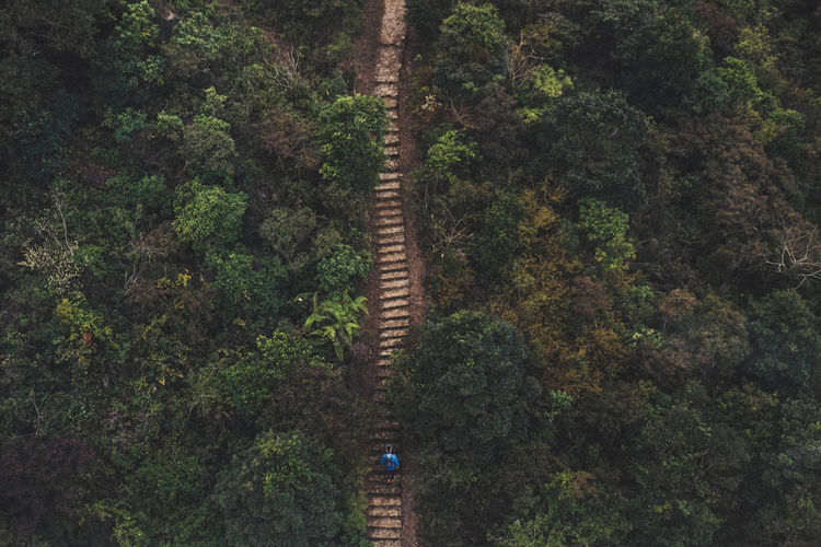 High Angle View Of Man On Steps Amidst Trees In Forest