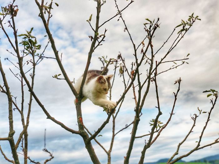 Close-up of squirrel on tree branch