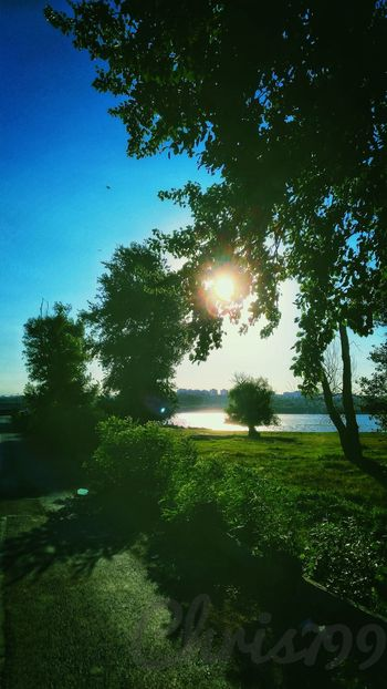 Tree Nature Outdoors Growth Sunlight Beauty In Nature Green Color Tranquility No People Day Sky Scenics Grass Clear Sky Freshness Sunset Danube Dunare Galați Dunarea Water Reflections Danube Galati Sun And Sky Sunset Silhouettes Clear Sky