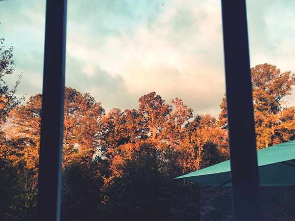 EyeEm Selects Tree Window Autumn Nature Sky No People Day Beauty In Nature Change Scenics Cloud - Sky Leaf Outdoors Growth Fall Colors Season  Tranquility Autumn