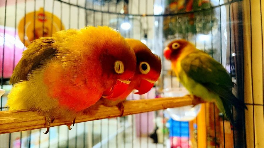 EyeEm Nature Lover a pair of love bird Taking Photos Beautiful Colours.... Eye4photography