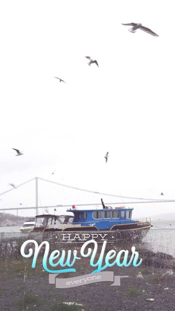 Bosphorus Seagull Istanbul