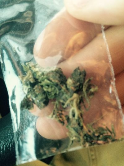 Weed Cannabis Fifka Jaranko