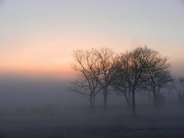 Canon EyeEm Nature Lover Mist Fog Hugging A Tree