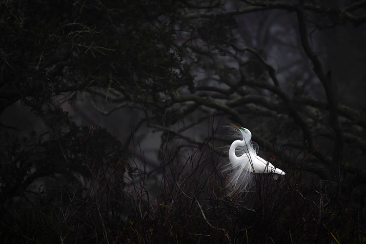 Plant Animal Themes One Animal Tree Animals In The Wild Bird Animal Vertebrate Animal Wildlife Nature Land No People Day White Color Growth Focus On Foreground Outdoors Perching Egret Field
