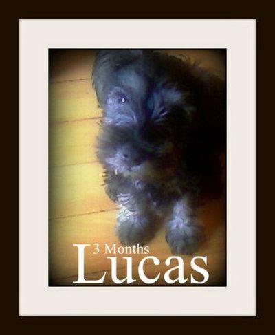 Lukas!