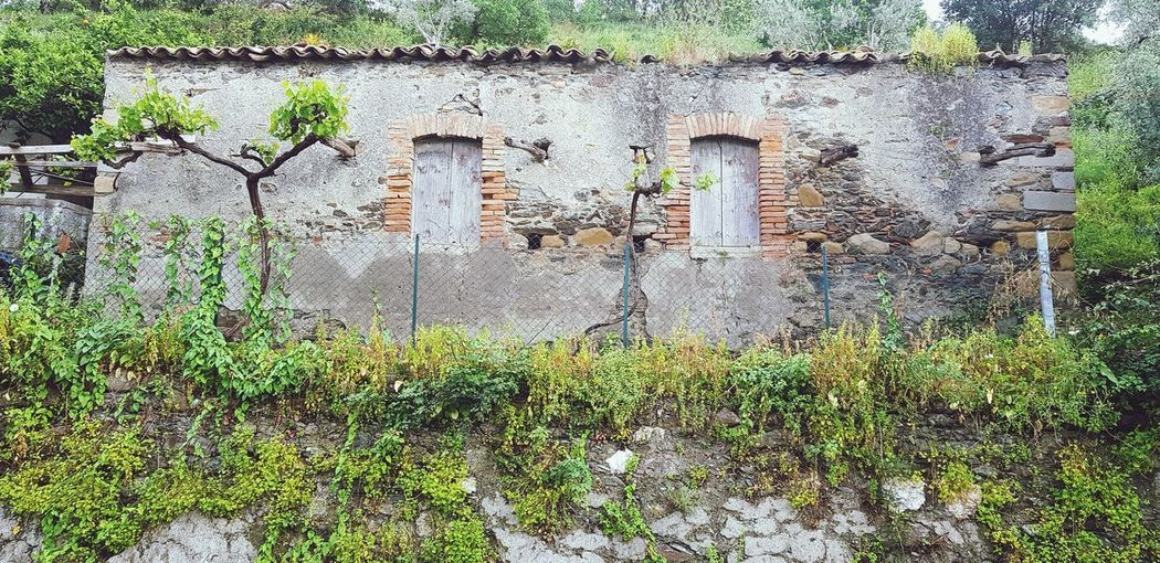 Abandoned ruin. EyeEm Selects EyeEm Best Shots Sicily, Italy EyeEm Gallery Spring Flowers Full Frame Grass Architecture Plant Close-up Built Structure Building Exterior Green Color Creeper Plant