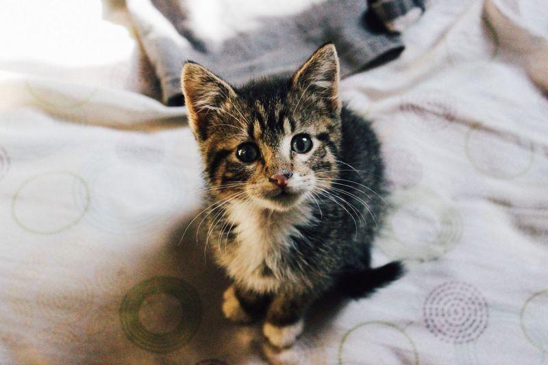 A kitten named Leon Cat Animals Cute Pets EyeEm