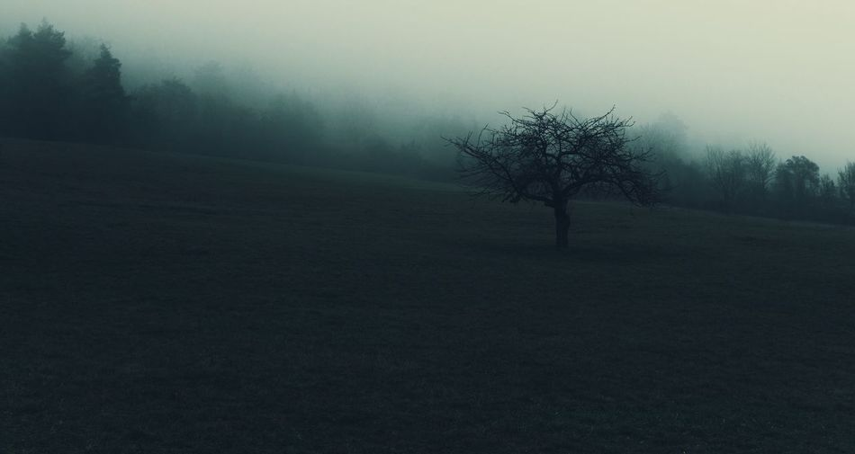 The alone tree in the fog. Tree Nature Landscape Fog Mist Hazy  Bare Tree Alone Outdoors Lonely Green Tranquility Tranquil Scene Beauty In Nature Lone Forest Hill Scenics Woods Tree Trees Nebel Countryside No People Isolated