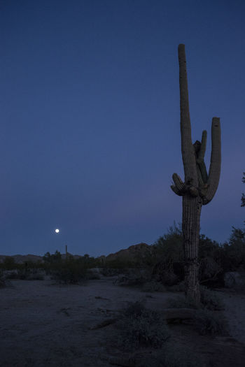 Arizona Astronomy Beauty In Nature Cactus Cactus EyeEm Best Shots EyeEm Nature Lover Eyem Best Shots Miles Away Moon Nature Nature Nature_collection Outdoors Roadtrip Sky Sonoran Desert Taking Photos Travel Travel Destinations