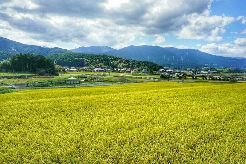 In Japan Fukuoka City  Autumn🍁🍁🍁 Mountain View Green Green Green!