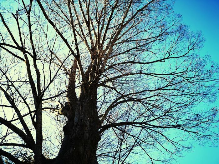 Low angle view of bare tree against clear blue sky