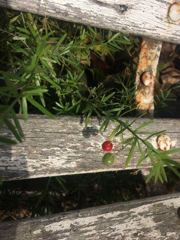 Colorada Plant Animal Animal Themes Growth Nature Day No People