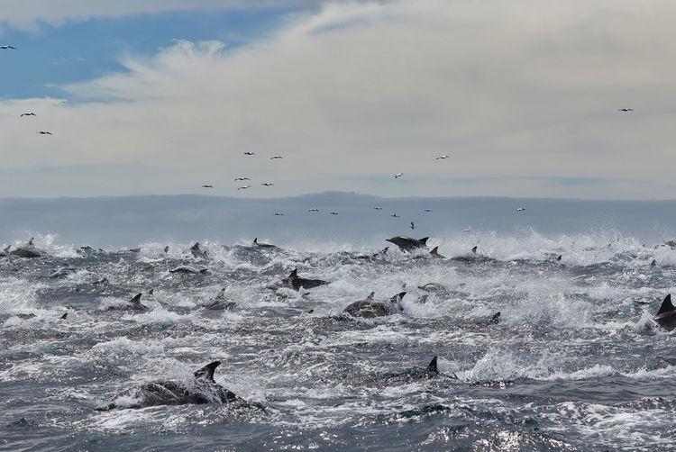 Seagulls flying over sea against sky