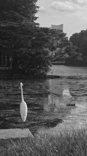 気になる… thinking about… White Bird Birds Monochrome Black And White Urban Nature Waterscape Animal Photography Thinking About You EyeEm Best Shots EyeEm Nature Lover