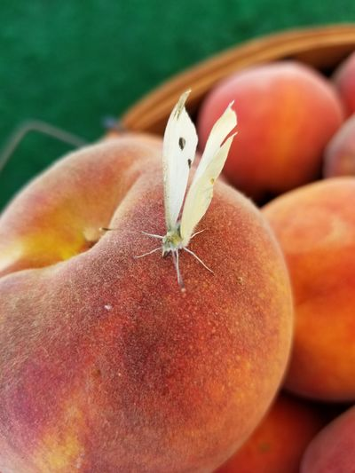 A buterfly on our peaches today wow.!