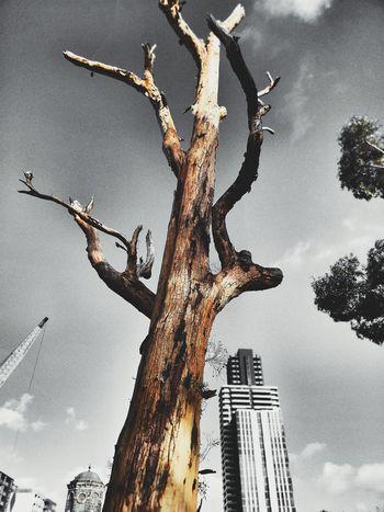 dramatic tree Tree Sky