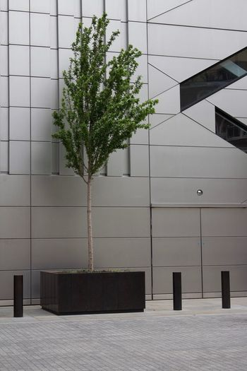 City Contrast Plant Architecture Built Structure Building Exterior Building Tree Nature No People Day Growth Wall - Building Feature Outdoors City Pattern Sunlight Modern Empty Absence Office