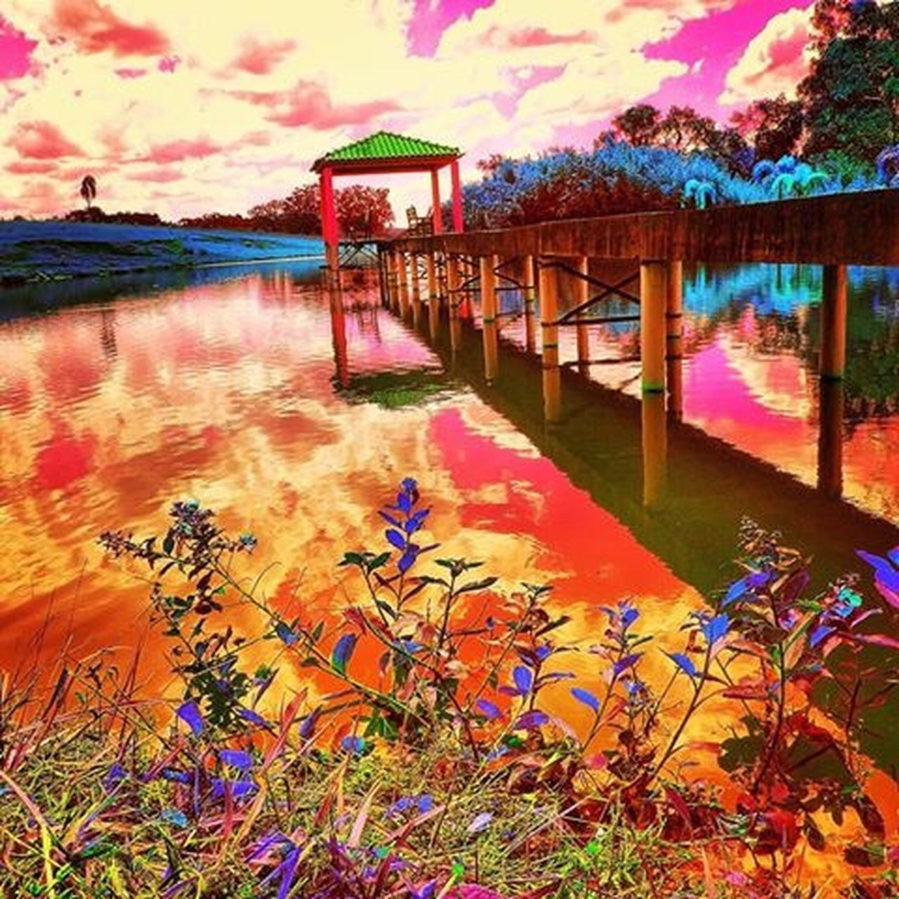 water, reflection, lake, nature, beauty in nature, tranquility, standing water, flower, scenics, tranquil scene, outdoors, waterfront, sky, plant, tree, no people, day