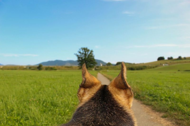 Hunde Perspektive Field One Animal Mammal Animal Themes Domestic Animals Grass No People Day Nature Outdoors Beauty In Nature Pets Dog Landscape