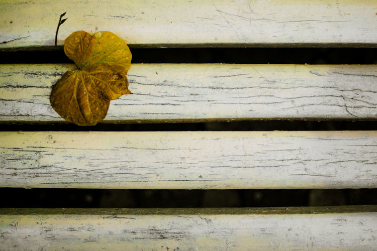 Bench Abstract Wallpaper Leaf Yellow Tones High Clarity EyeEmNewHere No People