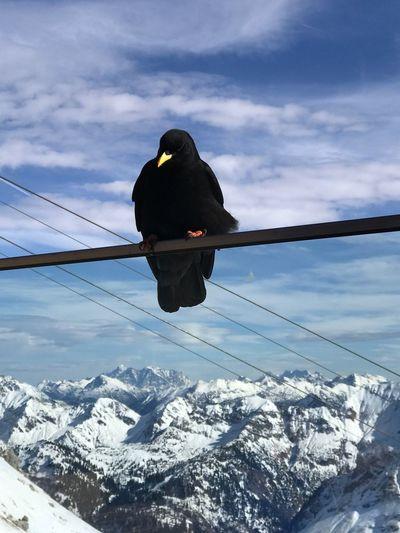Bird on snow covered mountain against sky