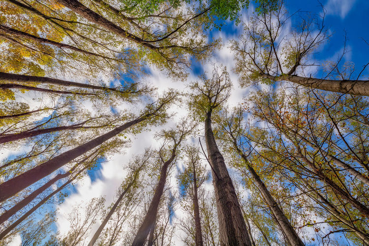 Low angle view of trees against sky
