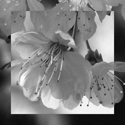EyeEm Selects Flower Flowering Plant Fragility Plant Vulnerability  Petal Beauty In Nature Close-up Flower Head White Color Blossom Botany Nature Pollen