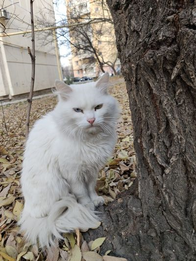 White cat sitting by tree trunk