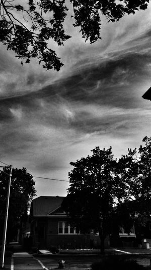 Tree Cloud - Sky Sky Outdoors City Nature Day Trees And Sky EyeEm Nature Lover Nature_collection Nature Photography TreePorn Tree_collection  Beautiful Nature Trees Mistic Atmosphere árbol Nem Nature Branch Beauty In Nature Scenics Architecture Streetphotography Bnw Bnw_collection